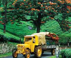 Tour Package In Thekkady